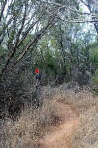 A flat bushy trail.