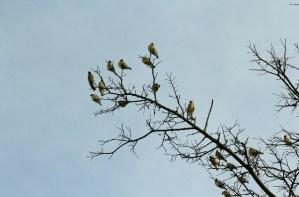 Copper Breaks State Park - Bull Canyon Trail - birds_2