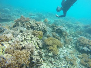 Two Worlds Treasures - corals at Pink Beach, Flores, Indonesia.
