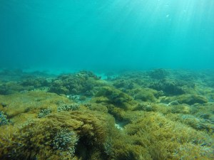 Flores: underwater life: Two Worlds Treasures