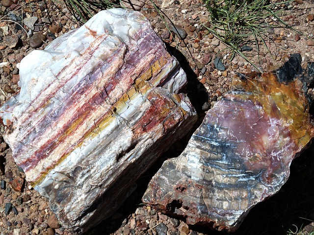 Petrified Forest National Park - crystal wood
