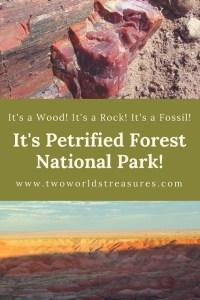 petrified forest np - pinterest