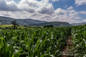 Mazie maze under the shadows of the Brecon Beacons