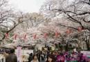 日本: 櫻花漫舞東京親子遊 – 櫻花隧道之上野恩賜公園~!!! (Tokyo, Japan)