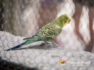 Fort Worth Zoo Parrot 鸚鵡