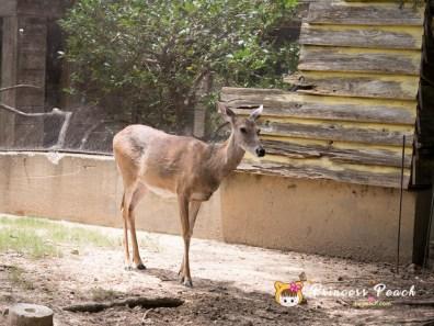 Fort Worth Zoo 鹿