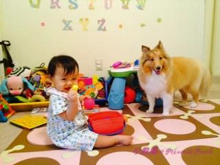狗狗寶寶和平共處
