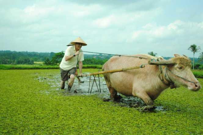 bali-honeymoon_tabanan-farmer-4