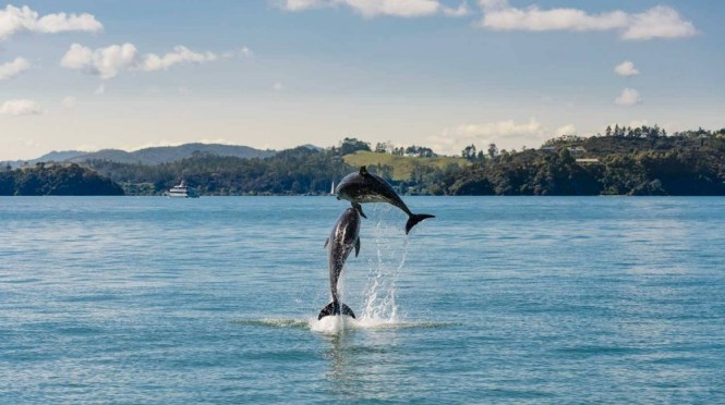 New Zealand Honeymoon Bay of Islands 4
