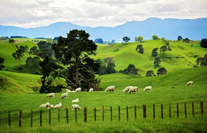 New Zealand Honeymoon_matamata-3