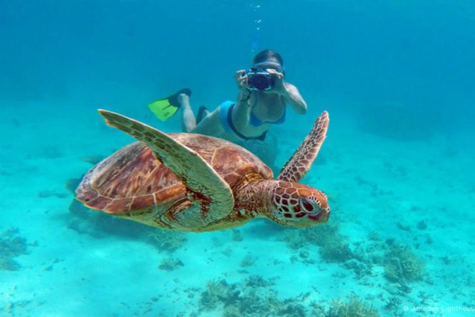 New Caledonia Honeymoon - Turtle Island - My New Caledonia