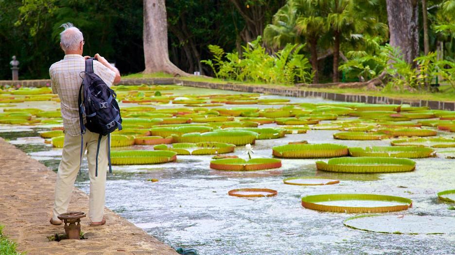 Mauritius Honeymoon - Pamplemousses Botanical Garden - Expedia
