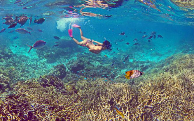 New Caledonia Honeymoon - Coral Reefs - Amedee Island