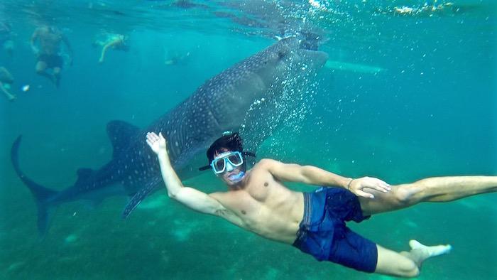 New Caledonia Honeymoon - Humpback Whales 2 - Pinterest