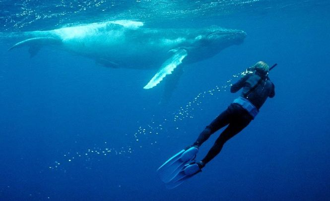 New Caledonia Honeymoon - Humpback Whales - Pinterest
