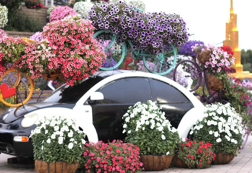 Dubai Miracle Garden   Dubai Honeymoon