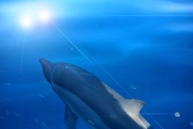 PalawanHoneymoon-Dolphin2-PuertoPrincesa