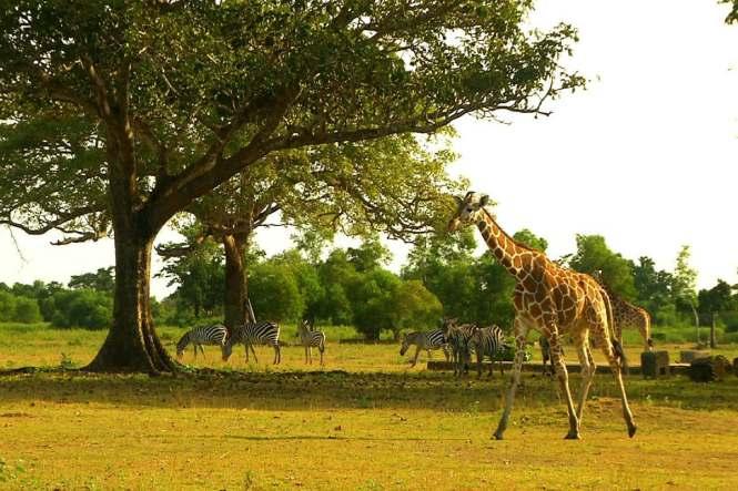 PalawanHoneymoon-safari-PalawanAdventures