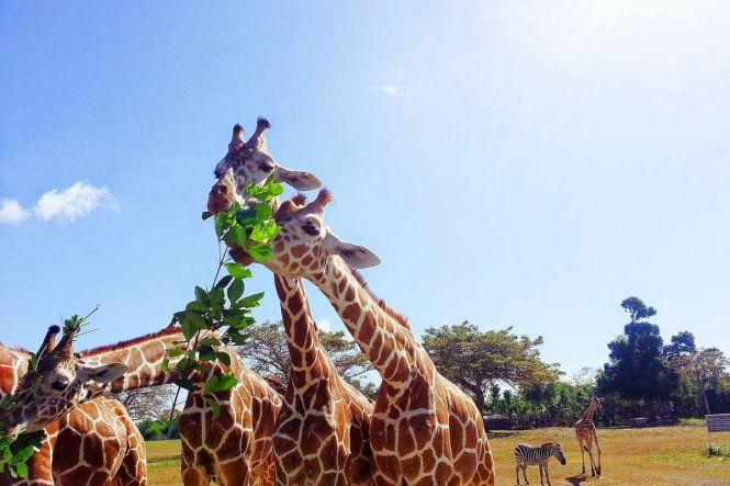 PalawanHoneymoon-safari-ruthinjourney