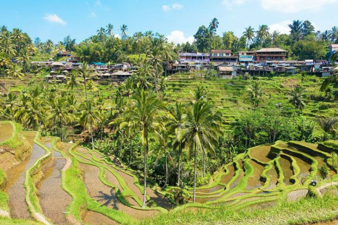 tegallalang rice-terraces bali indonesia