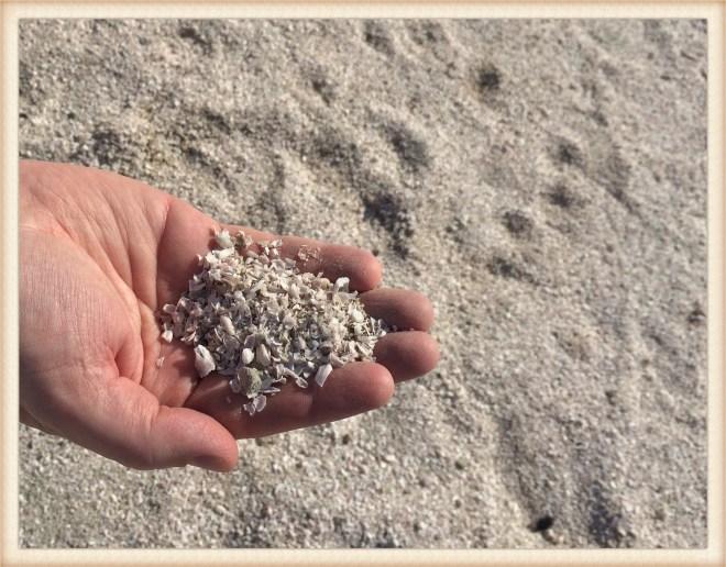 Mecca Beach bones
