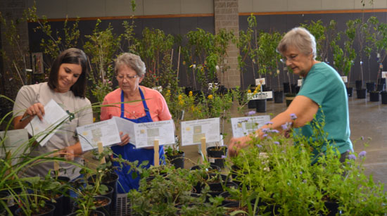 Thanks to Christy Reece (left), our awesome, fearless plant sale leader!