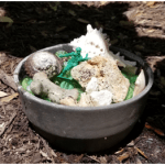 Insect water dish