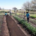 amending row garden and fertilizing garden 02242017