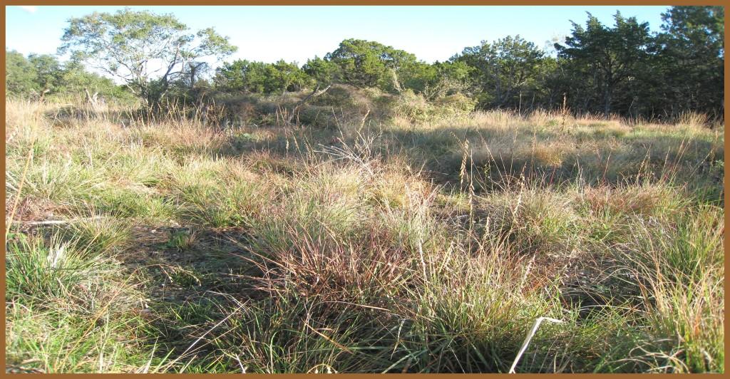 Phil Hardberger Park three-acre savanna restoration photographed by Barbara Schmidt