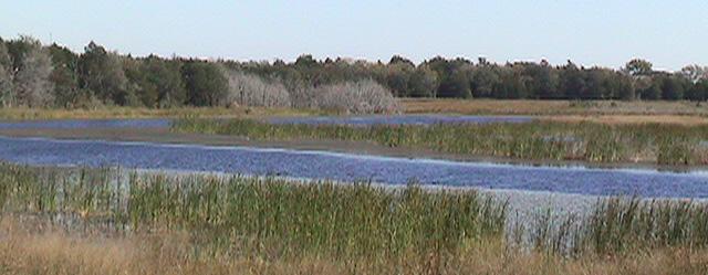 Marshy Stream