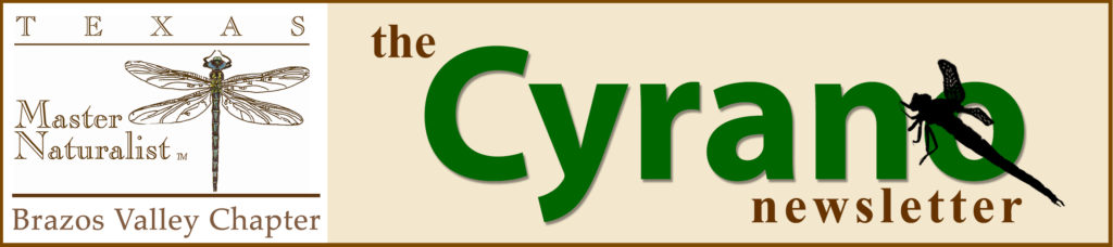 The Cyrano Newsletter logo