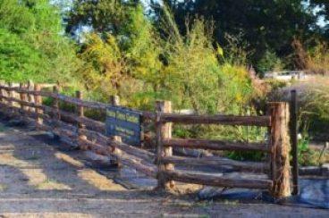 feral-hog-fence-11-2-16-jbrannon