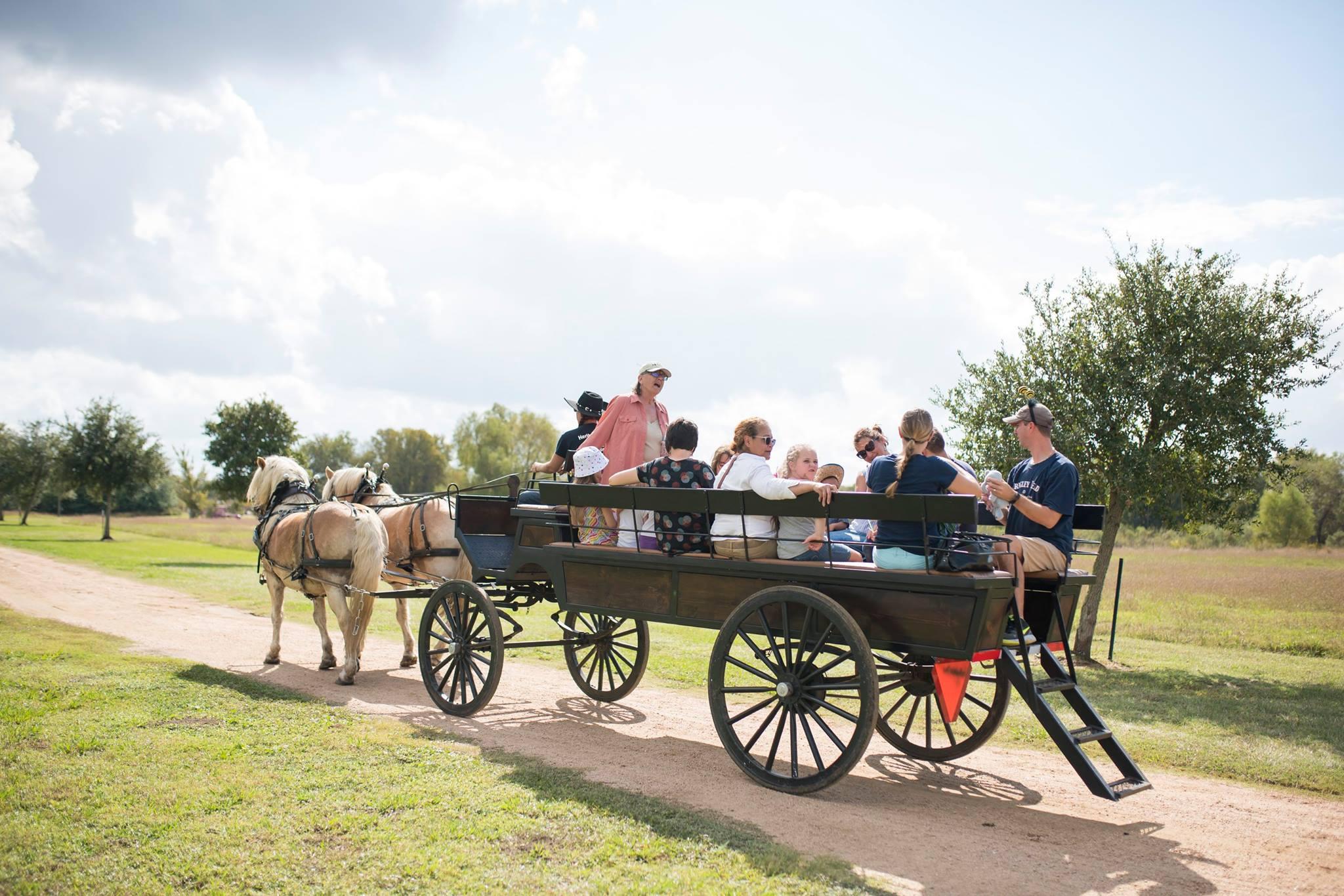 horse-drawn wagon with Nancy Swallow talking-PHF 2017-RKuykendall