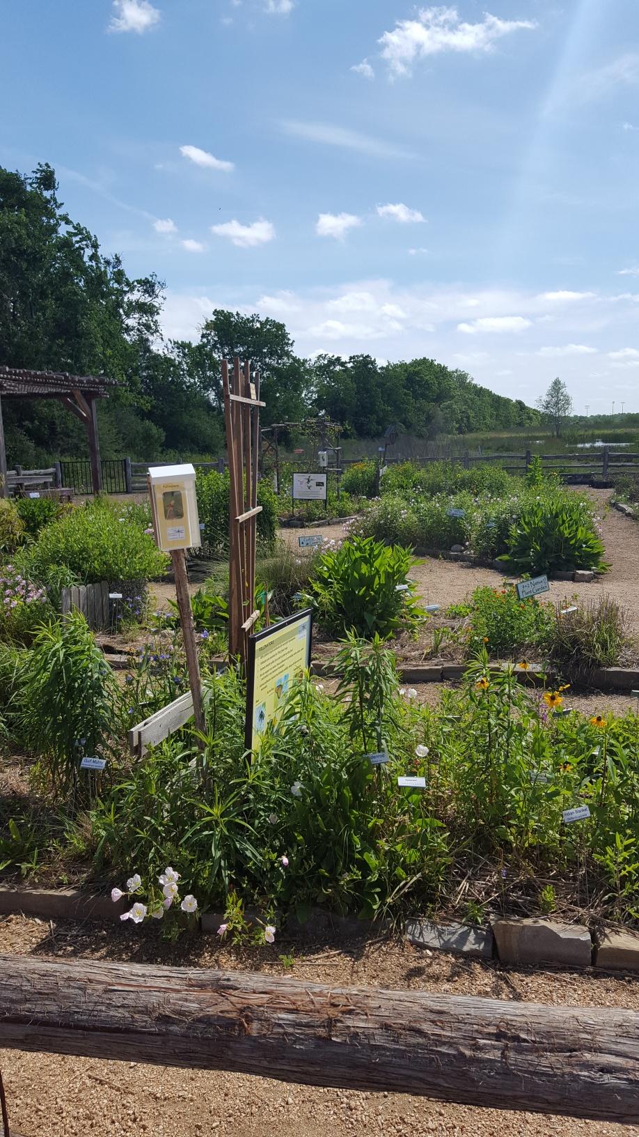 Seabourne Nature Park Prairie Garden on Earth Day 2019 by TMN Kimberly Farou (12)