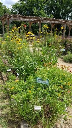 9 plus 2 Native Plant Garden resized June 2019-LTrenta