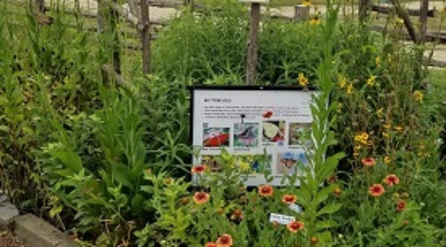 Butterfly garden4–resized-LTrenta June 2019