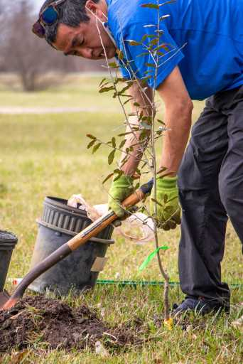 Texas Master Naturalist plants tree