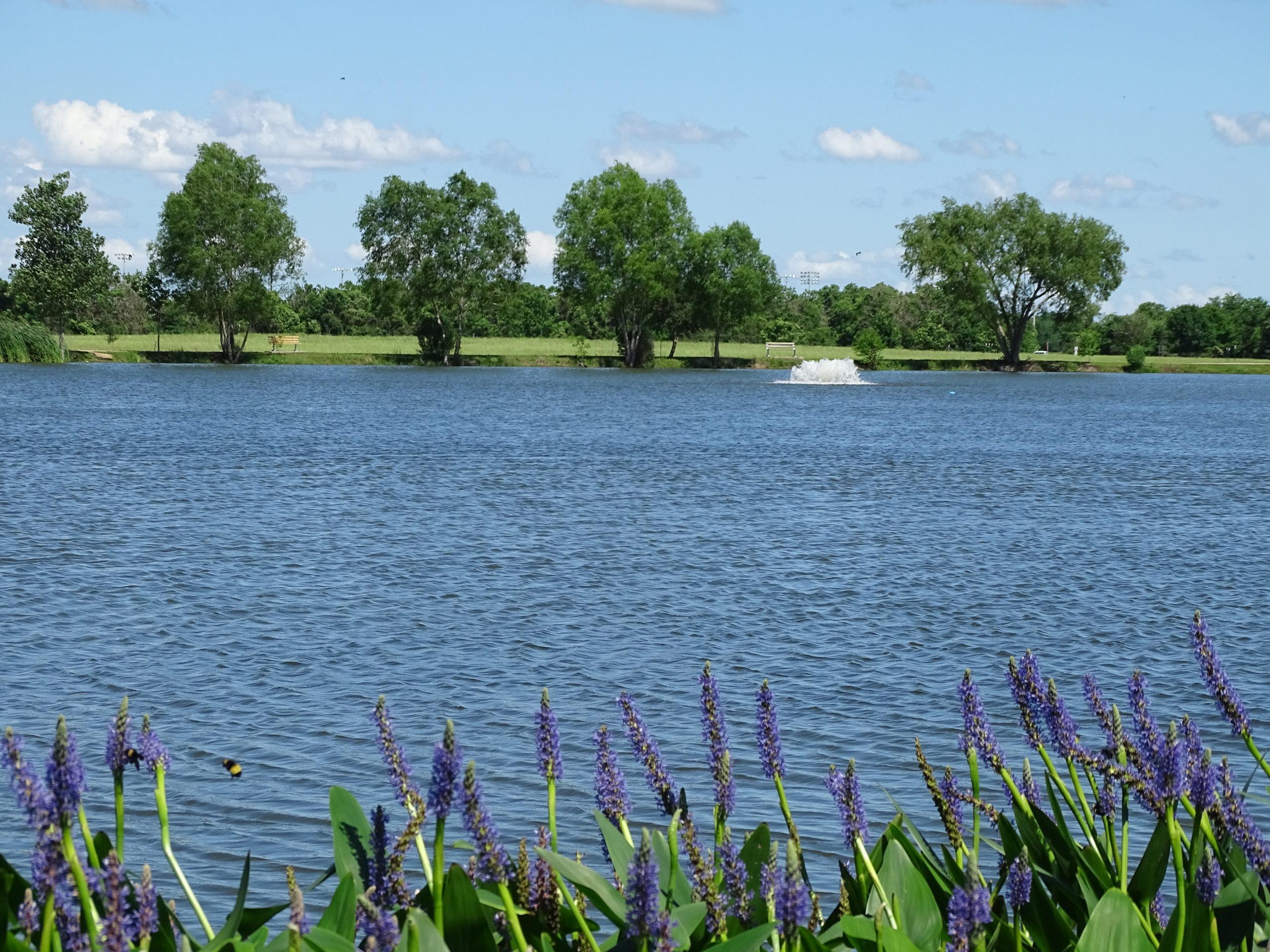 Seabourne Lake at Seabourne Nature Park