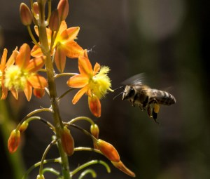 bee at flower