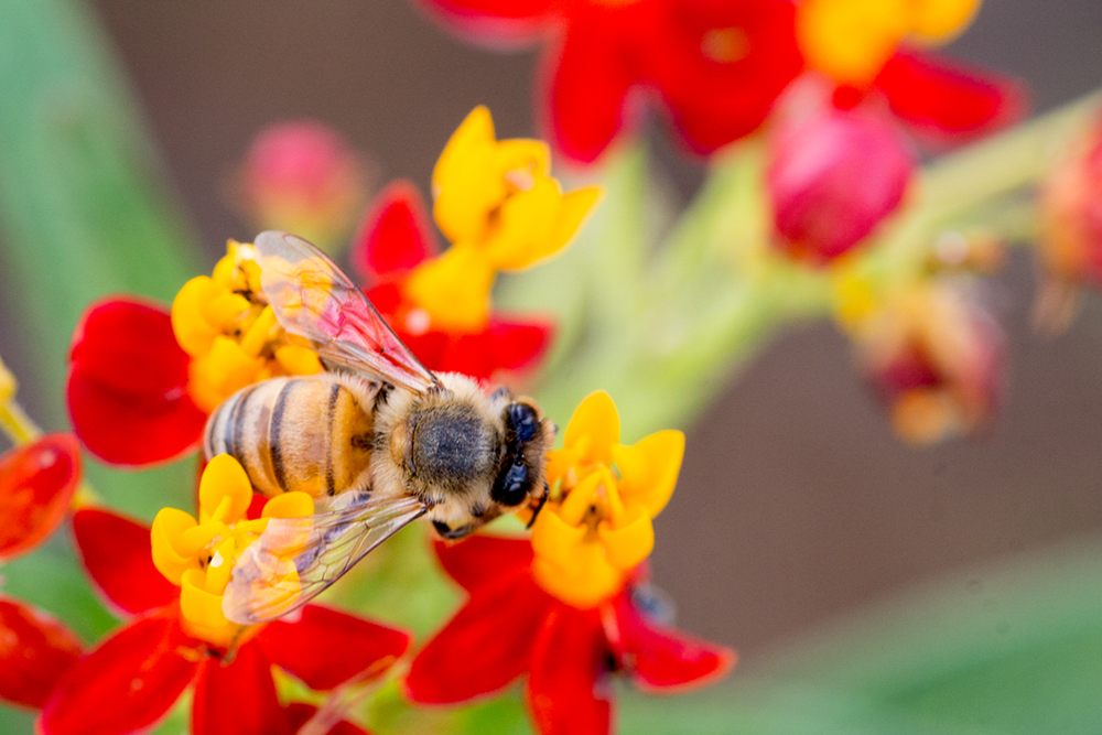 PollinatorGarden_17