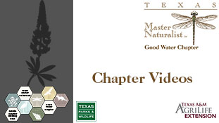 Chapter Videos