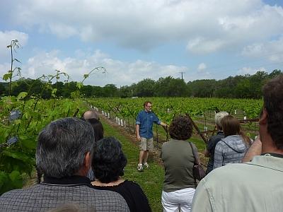Dry Comal - vineyard
