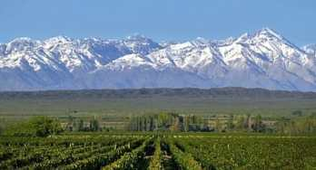 mendoza-vineyards