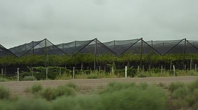 Canopies over vineyard