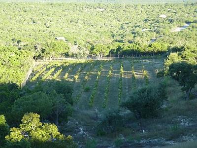 Hawk's Shadow - vineyard