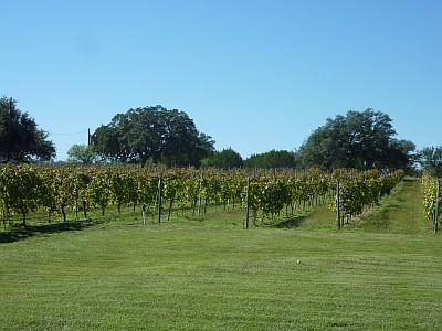 Stone House - vineyard