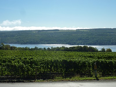 Dr. Frank Wines - overlooking the vineyard and lake