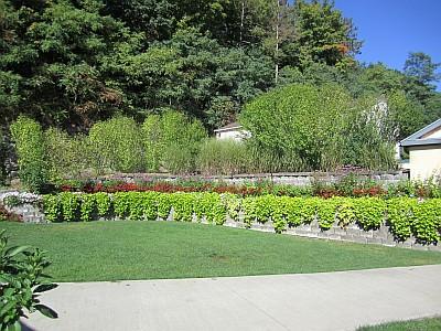 Heron Hill - flowers