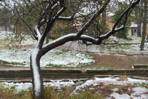 Snow in Kidd Springs Park