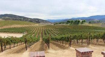 Vineyards of Leoness Cellars